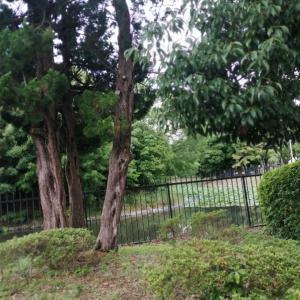 近畿地方で最も古くから水田耕作が行われていた農村集落「吉田遺跡」と西山延命地蔵