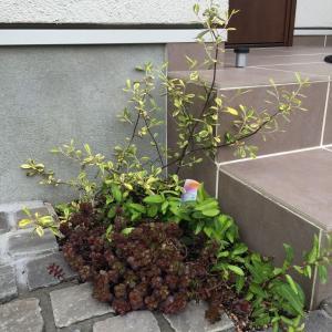 新外構の植栽