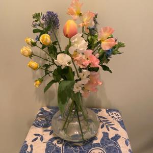 近況、免疫あげよう、春の花、ウチご飯、アスター、ルサロンジャックボリーなど。