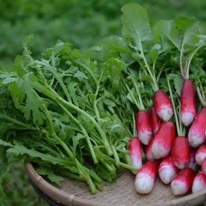 晴れ間をみて、野菜の収穫です
