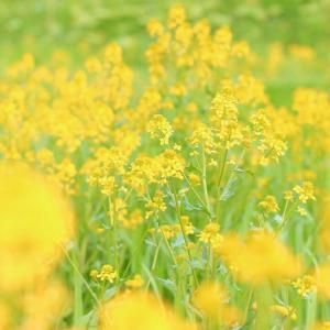 全体に咲く花