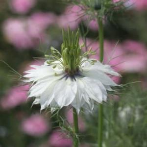 我家の庭や鉢で咲いた花と斑入り植物達・・その3