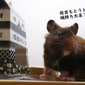 佐吉の動く城!