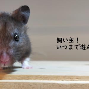 お名前いろいろ(3月)