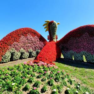 ジギタリス 季節の花 明石海峡公園