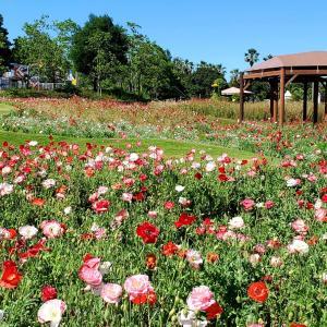 バラの花写真まとめ 須磨離宮公園5月撮影