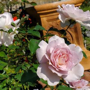 ニューウェーブ 薔薇の花