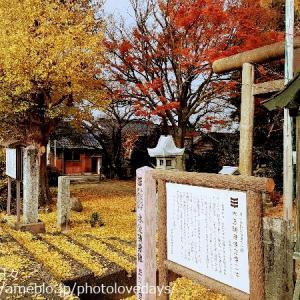 【琴浦町】季節限定!幻想的黄金色に染まった神社/方見神社