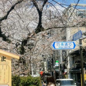 義姉と一緒に京都へお花見(八坂神社・丸山公園・高台寺・二年坂~清水寺)