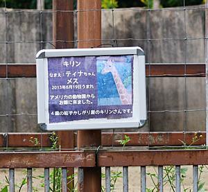 2020.10.14 東武動物公園☆キリンのホープくん、ティナちゃん、ナツコちゃん【Giraffe】