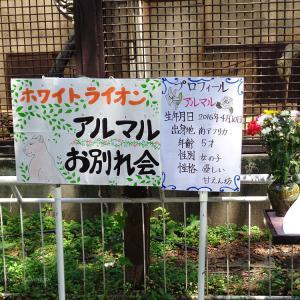 2021.7.25 宇都宮動物園☆ホワイトライオンのアルマルちゃんお別れ会