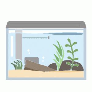 水槽を緑でいっぱいにしよう!! 水草育成グッズ3点 後から購入しても大丈夫 レイアウト&便利グッズ6点