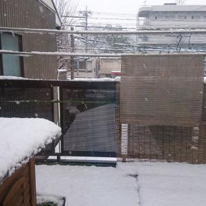 いきなりの積雪