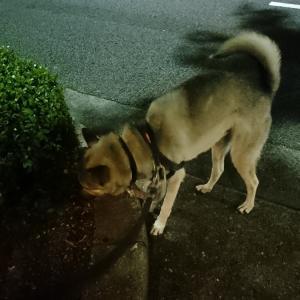 夜中3時の散歩・・・