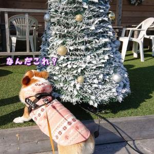 ちょっとクリスマス気分♪