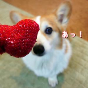 ハートの形のイチゴちゃん