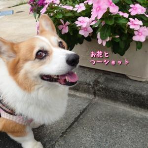 笑顔でアピールしてくる☆つーさん。