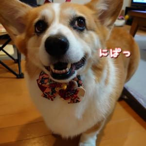 フワモコつーさん☆リボン付。