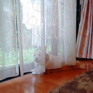 カーテンの向こうから☆にぱっ。