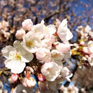 *春が来ました*
