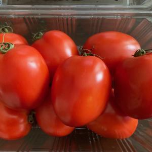 ボンリッシュトマト