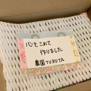 TURUTAのシャインマスカットを購入しました!