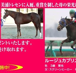 友駿の無料提供馬ルージュカプリス、入会金無料キャンペーン中に引退
