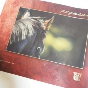 ユニオンオーナーズクラブ2020募集馬カタログ到着、気になった馬をピックアップ