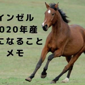 【インゼルTC2020年産】気になる馬などメモ