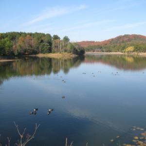 小野市「冬の鴨池」