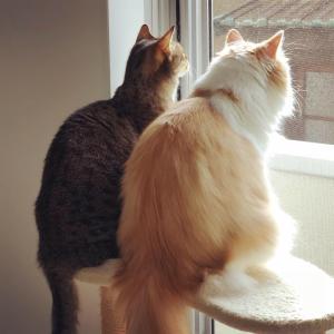 捨てようと思うと使う猫さんあるある