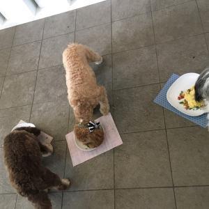 犬も3匹揃えば騒々しい❣️