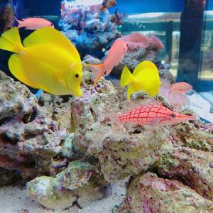 京都水族館◆子供と回りやすい工夫たっぷり!5点まとめてみた♪