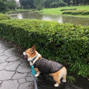雨のロング散歩