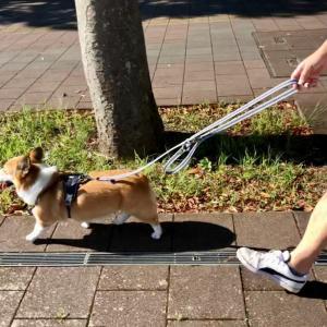 誰のお散歩?