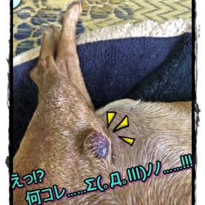 皮下腫瘤が赤黒く…水膨れド━━Σ(ll゚艸゚(ll゚艸゚ll)゚艸゚ll)━━ン!!