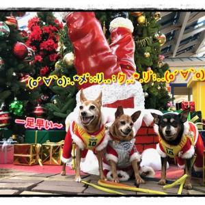 一足早い~、クリスマス♪お犬サンタがやってきた!!!