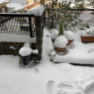 雪・雪・大雪ー!!