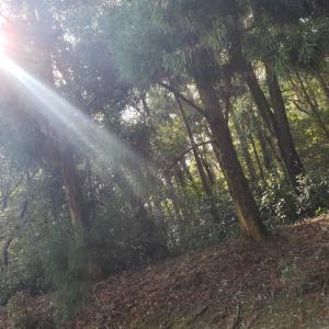 神様の美しい森