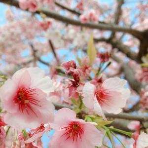 桜色のエネルギー【ピンクダイヤモンド】