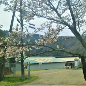 牧場の春♪