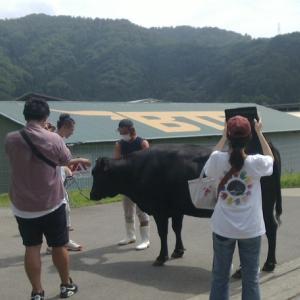 旅スル和牛!?