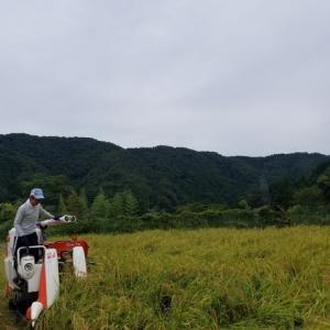 お米の収穫☆
