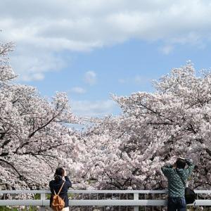 【悲報】上野公園で花見をしていた70代男性、コロナ感染