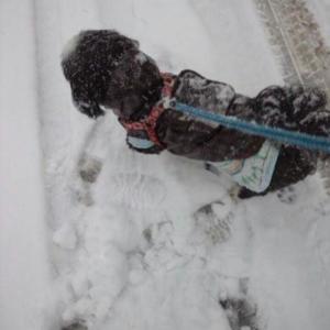 今日は雪の特異日ってなに?