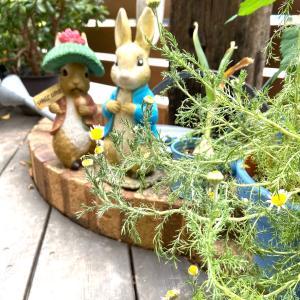 6月 小さな庭のハーブたち