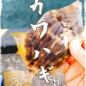 今熱い釣り♪ └(゚∀゚ )┘