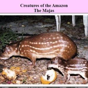 さすがアマゾン!GISO DE MAJASの肉たっぷり