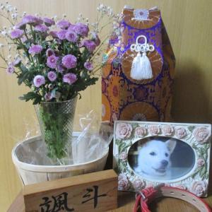 今日は颯斗君が天国に旅立ってから4ヶ月が過ぎ月命日です。