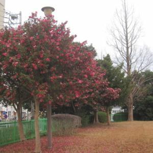 長く咲く冬の花